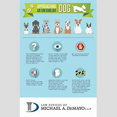 Avoiding Dog Bites How To Properly Approach A Dog [infographic]