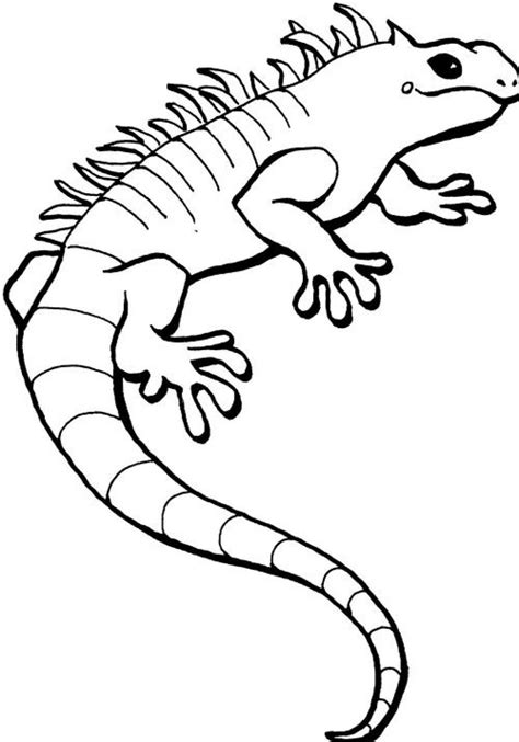 free printable iguana coloring pages for