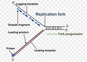 Dna Replication Replication Fork Enzyme Triangle  Png