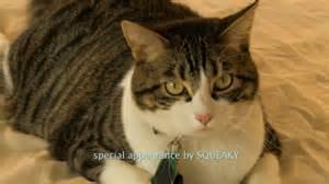 a talking cat review a talking cat craveonline