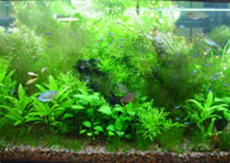 freshwater planted aquarium care and maintenance co2 in the planted aquarium
