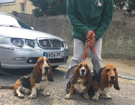 basset hounds walking group home page