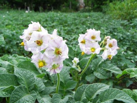 pflanzen im garten giftige pflanzen im garten obi