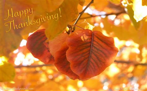 Fall Thanksgiving Computer Backgrounds by Thanksgiving Desktop Wallpapers Backgrounds 58 Images