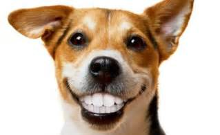 Dog with Human Teeth