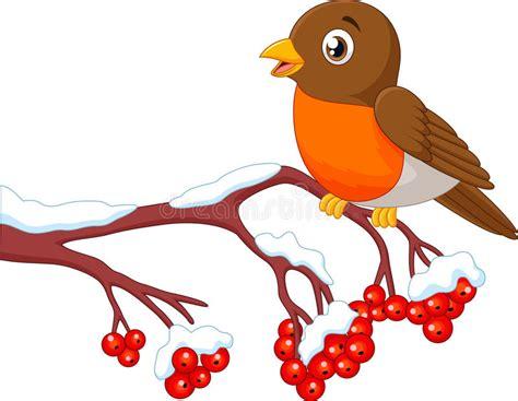 Cartoon Beautiful Robin Bird Posing On The Berry Tree