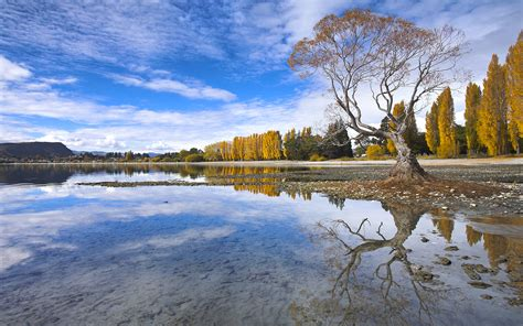 spectacular autumn colour   lake  wanaka otago