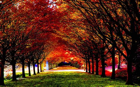 Cool Fall Backgrounds  Wallpaper Cave