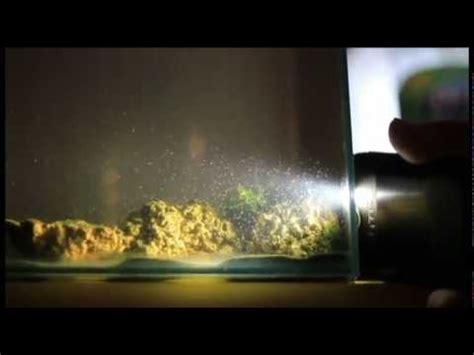 daphbio microfaune en aquarium recifal et eau de mer