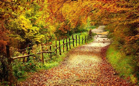 Autumn Roads Wallpapers by Autumn Country Road Hd Wallpaper Background Images