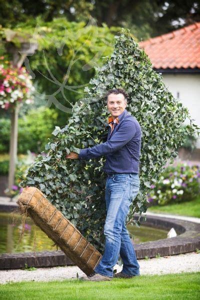 immergrüne bepflanzungen am gartenzaun efeu element 180 x 120 cm jubil 196 umspreis garten