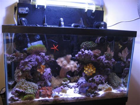 dickheaderss reef tanks photo id  full version