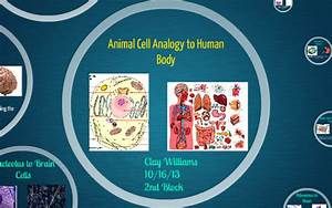 Animal Cell Analogy Animal Cell Analogy To Human Body By Clay Williams On Prezi