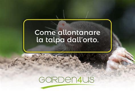 come allontanare le talpe dal giardino come allontanare le talpe da orto e giardino garden4us