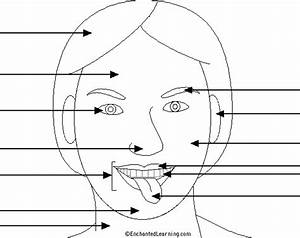 Label The Face  Head Printout