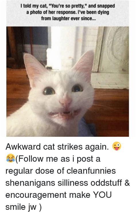 Awkward Cat Meme - 25 best memes about awkward cat awkward cat memes