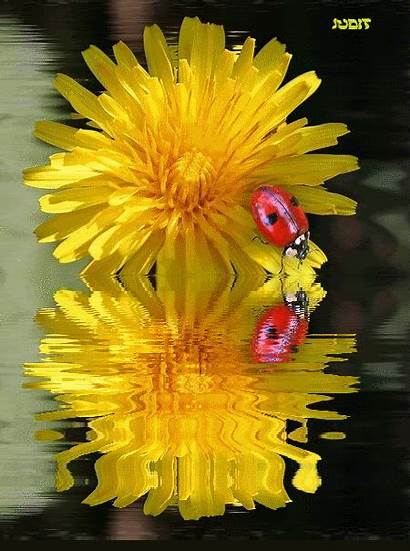 Yellow Flower Animated Water Reflection Flowers Reflections