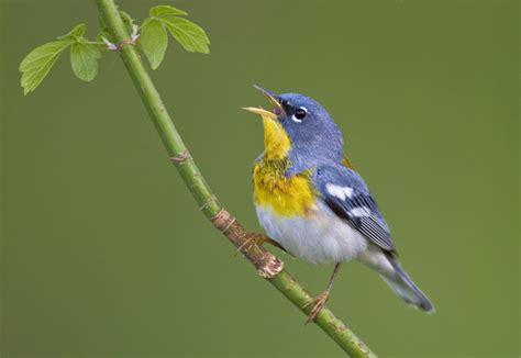 celebrate international migratory bird day this weekend at
