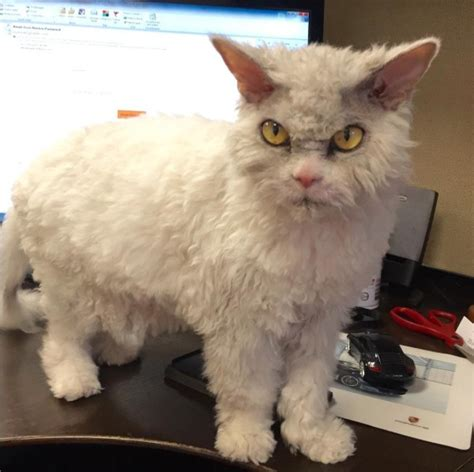 Cat That Always Look Pissed Off