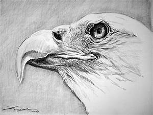 How To Draw A Eagle Eye | www.imgkid.com - The Image Kid ...