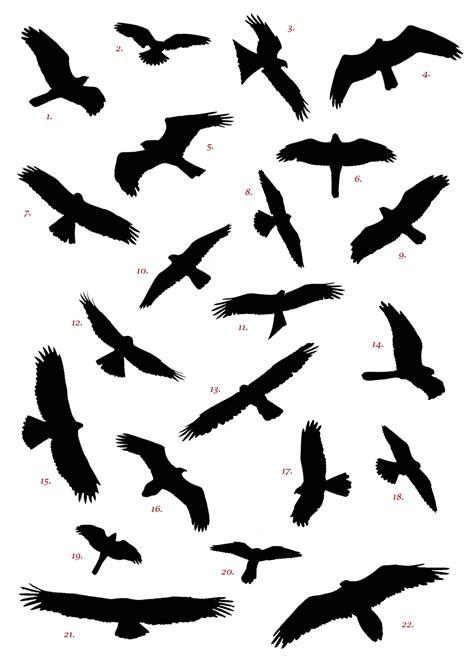 Free Birding Downloads - Birding in Spain.com - Discover