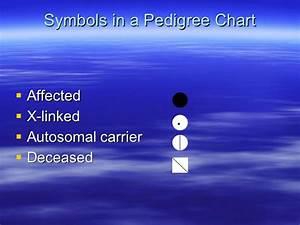 Pedigree Charts Powerpoint