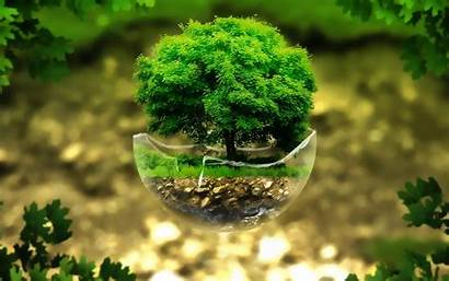 Bonsai Tree Wiki Amazing