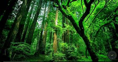 Rainforest Temperate Nature Rainforests Tropical Forests Forest