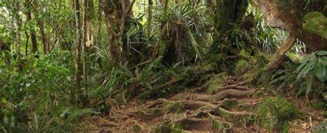 chambre d hote foret forêt de bébour bélouve villa oté chambres d 39 hôtes île