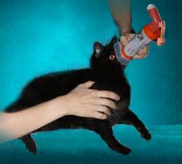 cat inhaler cat inhaler