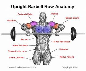 Exercises to rid belly fat, upright barbell rows muscles ...