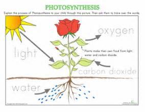 how plants grow worksheets plants and kindergarten science