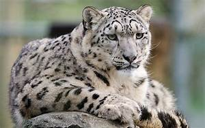 Domestic Cats That Look Like Leopards - 12 Super Wild ...