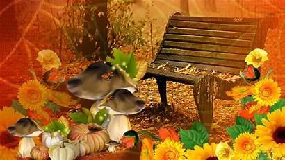 Fall Harvest Thanksgiving Pumpkin Autumn Bright Desktop