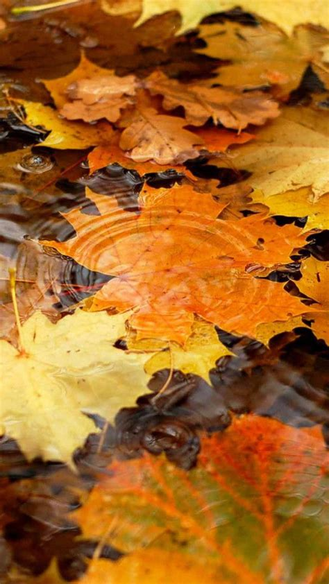 Fall Themed Wallpaper Iphone by Apple Iphone Fall Wallpaper Images Fall Wallpaper