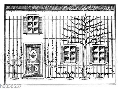 Laser Für Hauswand by Spalierobst An Einer Hauswand Quagga Illustrations