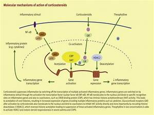 corticosteroids mechanism of action immunosuppression