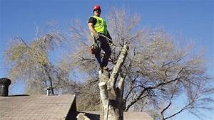 Tree Services Removal And Trimming Angie39s List