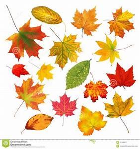 Feuilles D Automne à Imprimer : belles feuilles d 39 automne color es de collection d 39 isolement sur le blanc image stock image du ~ Nature-et-papiers.com Idées de Décoration