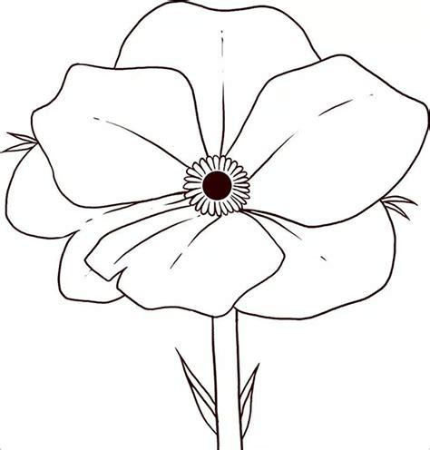 poppy outline drawing  getdrawings