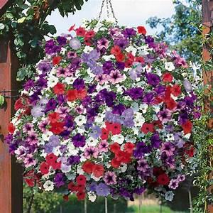 Balkonpflanzen Sonnig Pflegeleicht : 21 balkonpflanzen die zu ihrem eingenen balkon passen ~ Frokenaadalensverden.com Haus und Dekorationen