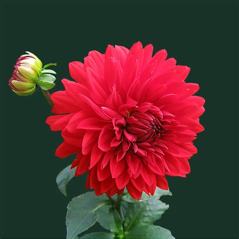 Maybe you would like to learn more about one of these? Red Beautiful Flowers Wallpapers For Mobile - Cool HD ...