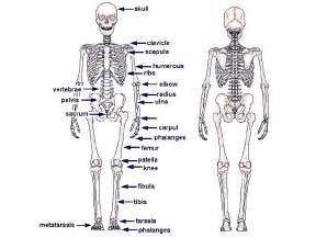 7th Grade Human Body Systems Worksheets