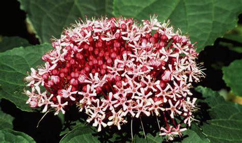 Six Of The Best Lateflowering Shrubs  Garden Life