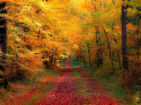 Fall Harvest Hd Pc Wallpapers 3788  Amazing Wallpaperz