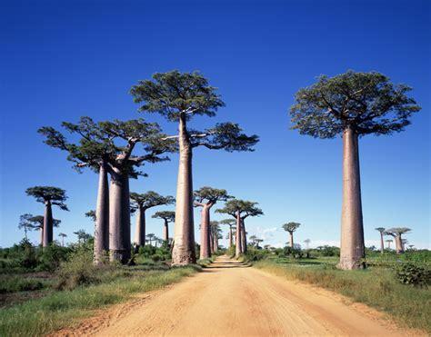 Madagaskar Erfahrungsbericht - Unsere Rundreise mit ...