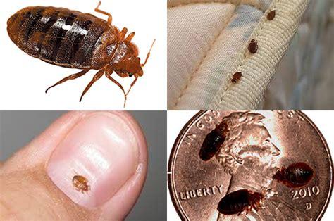 Bed Bug Exterminator South Carolina