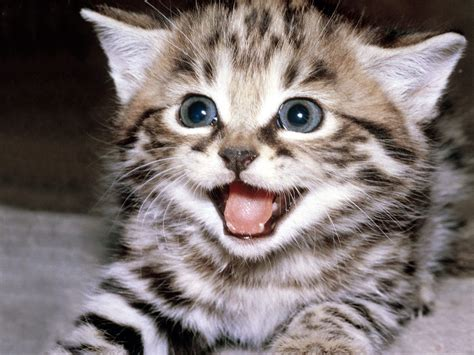 Funny And Cute Cat Pictures 19 Cool Hd Wallpaper