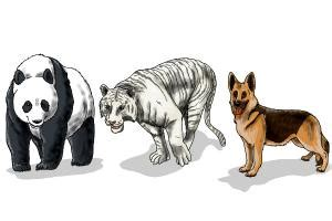 draw animals step  step easy drawings  kids