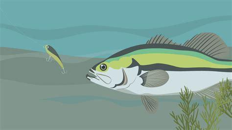 fish  fishing  fixcom